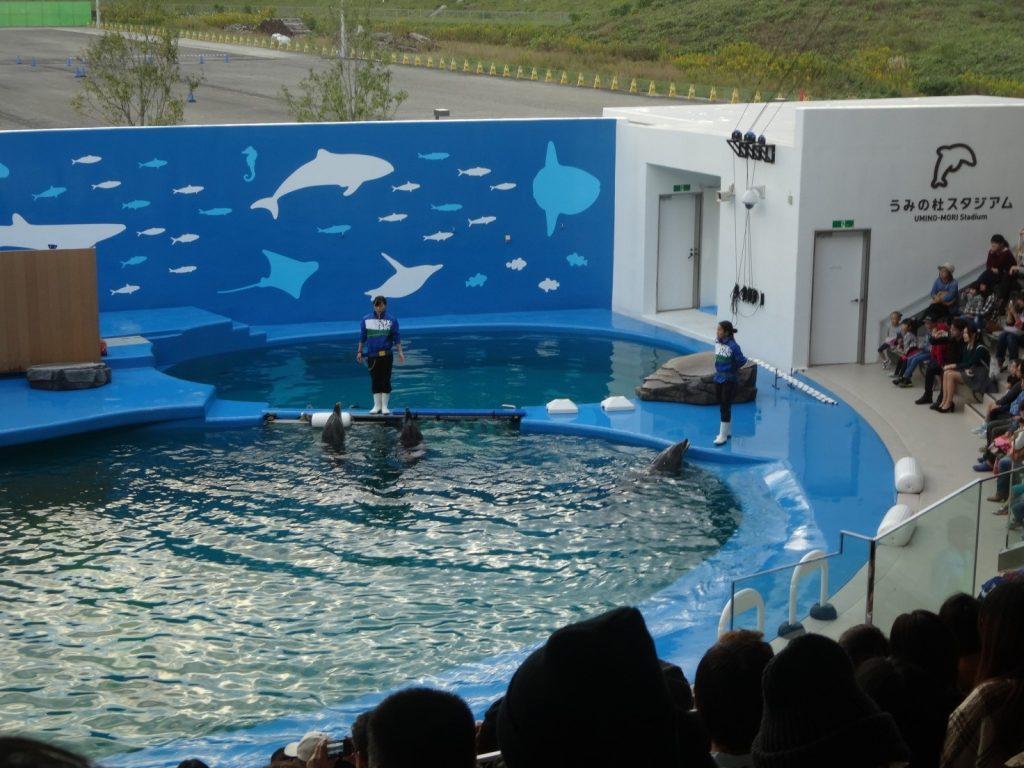イルカとアシカのパフォーマンスショー