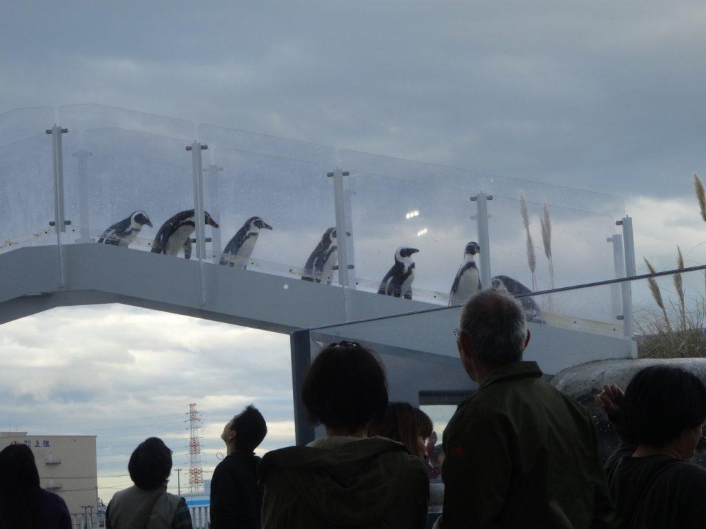 ペンギンたちが通る透明な階段